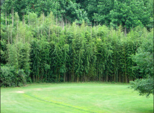 Bamboo Containment